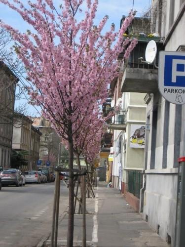 Aleja drzew śródmiejskich