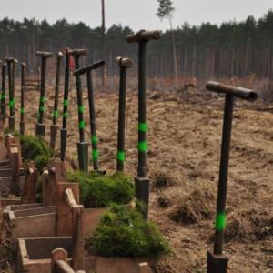 """Sadzenie drzew w ramach projektu """"Leśna Skrzynia Skarbów"""""""