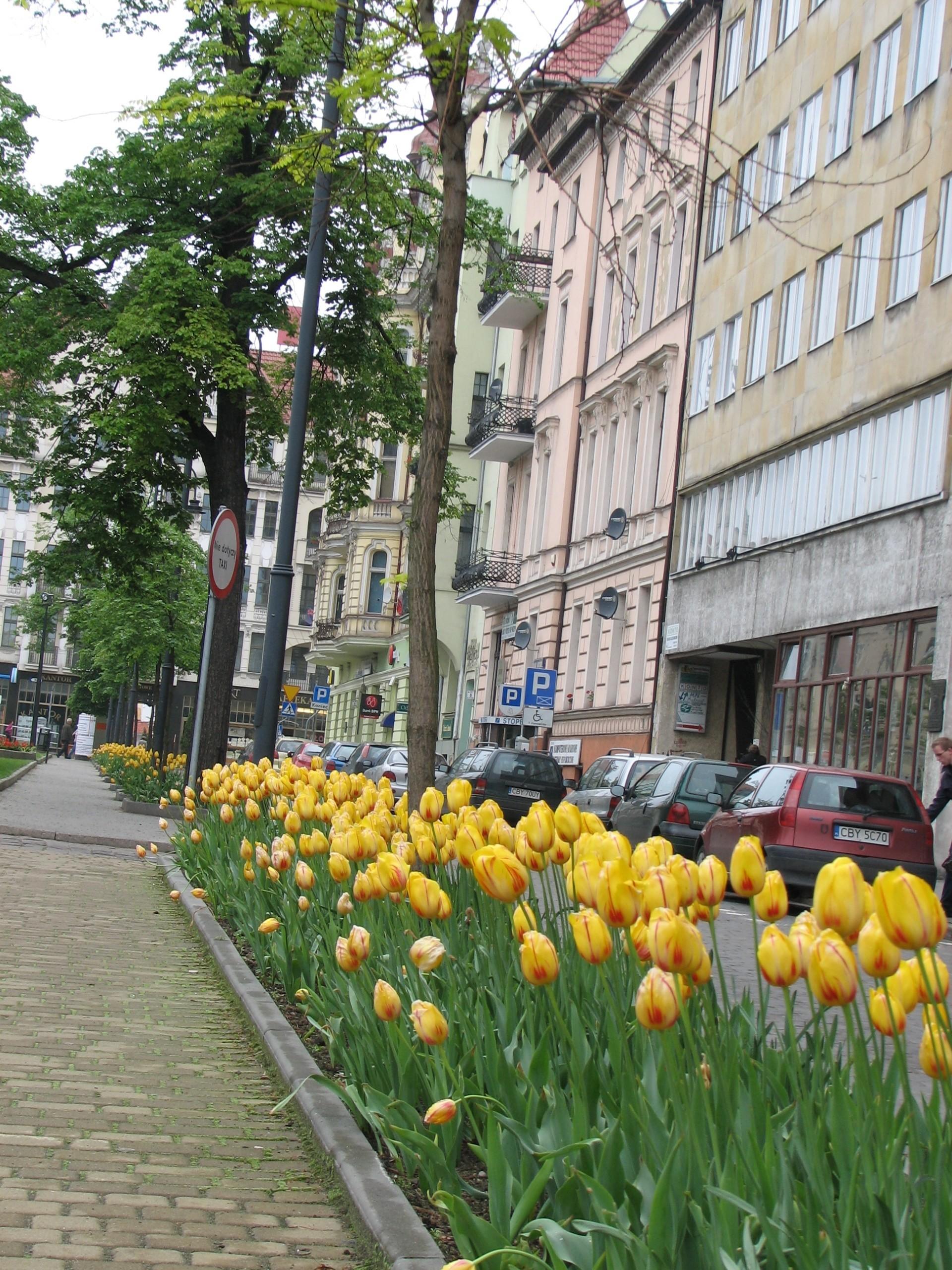 Wiosenne inspiracje zieleni