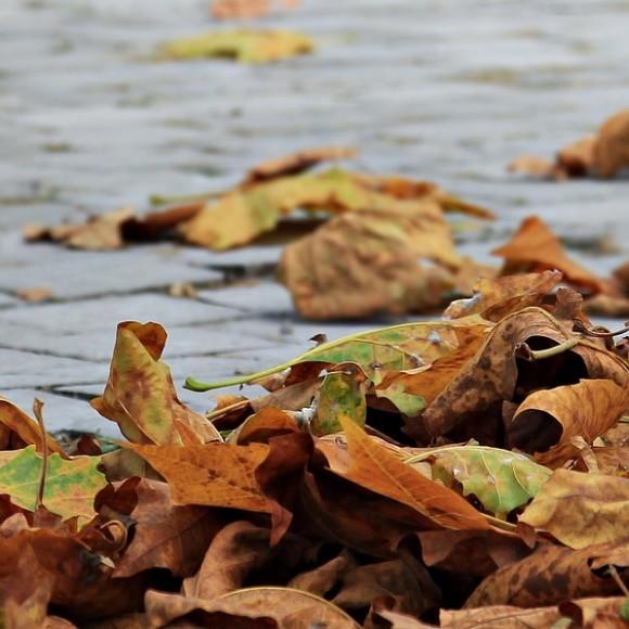 Od 1 listopada odpady zielone odbieramy co 2 tygodnie