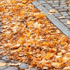 Oczyszczanie chodników z liści