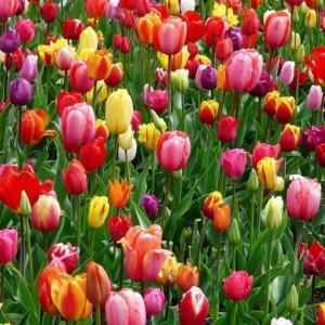 Nowe drzewa i tysiące kwiatów