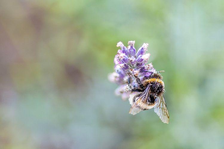 Zachęcamy do oddania głosu na temat ochrony pszczół w Bydgoszczy