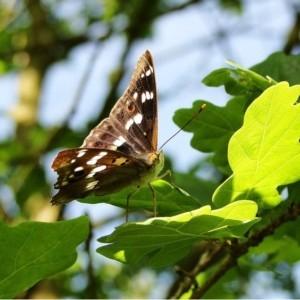 Bydgoski Grant Ekologiczny – nabór zgłoszeń
