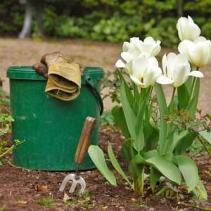 Opakowania po środkach ochrony roślin. Co z nimi zrobić aby nie szkodzić sobie i środowisku?