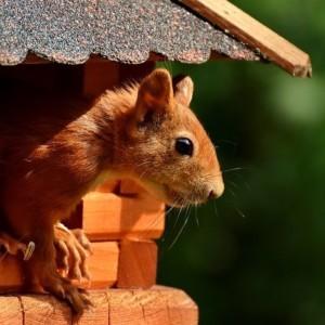 Uwaga na wiewiórki – nowe oznakowania w Bydgoszczy