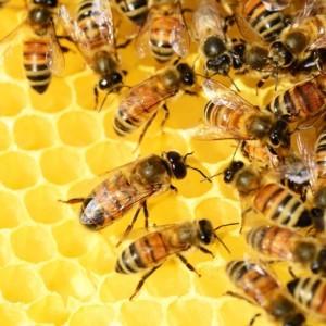 Pięć minut dla pszczół