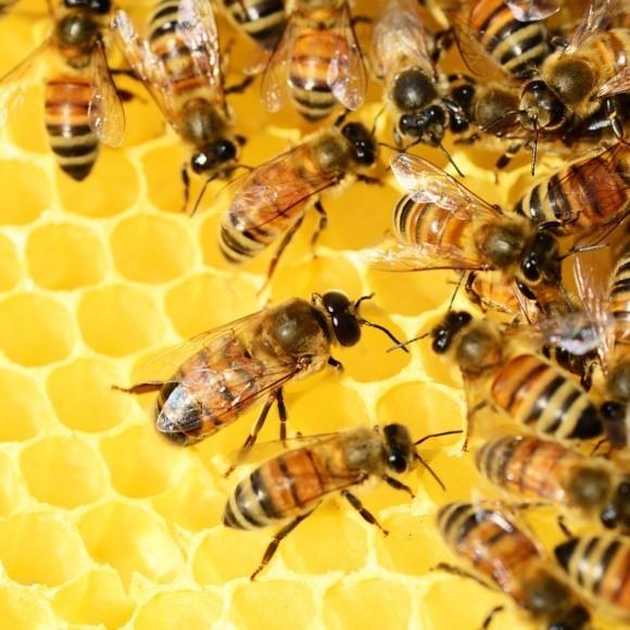 Kilka minut dla pszczół