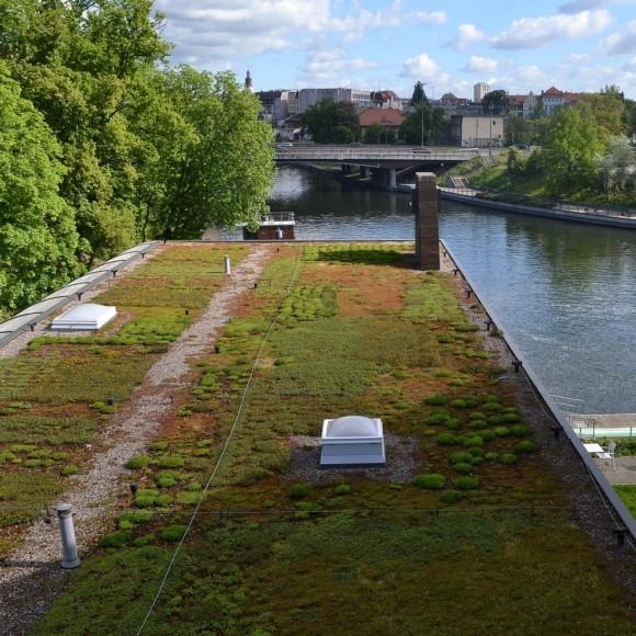 6 czerwca – Światowy Dzień Zielonych Dachów