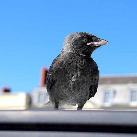 Zadbajmy wspólnie o los miejskich ptaków