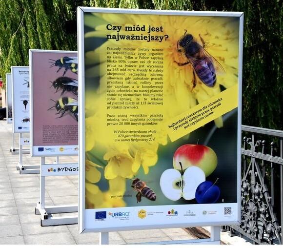Miejskie pszczoły zostaną z nami do końca wakacji