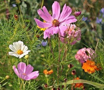 Społeczne tworzenie ogrodu – włącz się w inicjatywę BCOPW