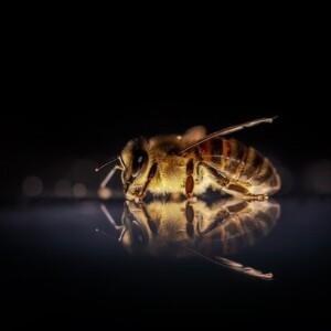 Dawid Kilon o pszczołach