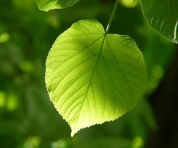 Dołącz do zespołu ds. zieleni!