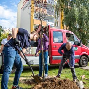 Zostań wolontariuszem i zasadź drzewo