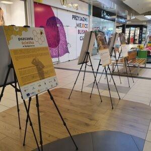Pszczela wystawa w Fordonie